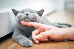 Jak dbac o dywan kiedy w domu mieszka kot lub pies