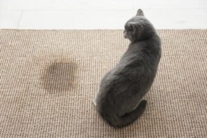 Najczestsze plamy na dywanie – jak z nimi skutecznie walczyc