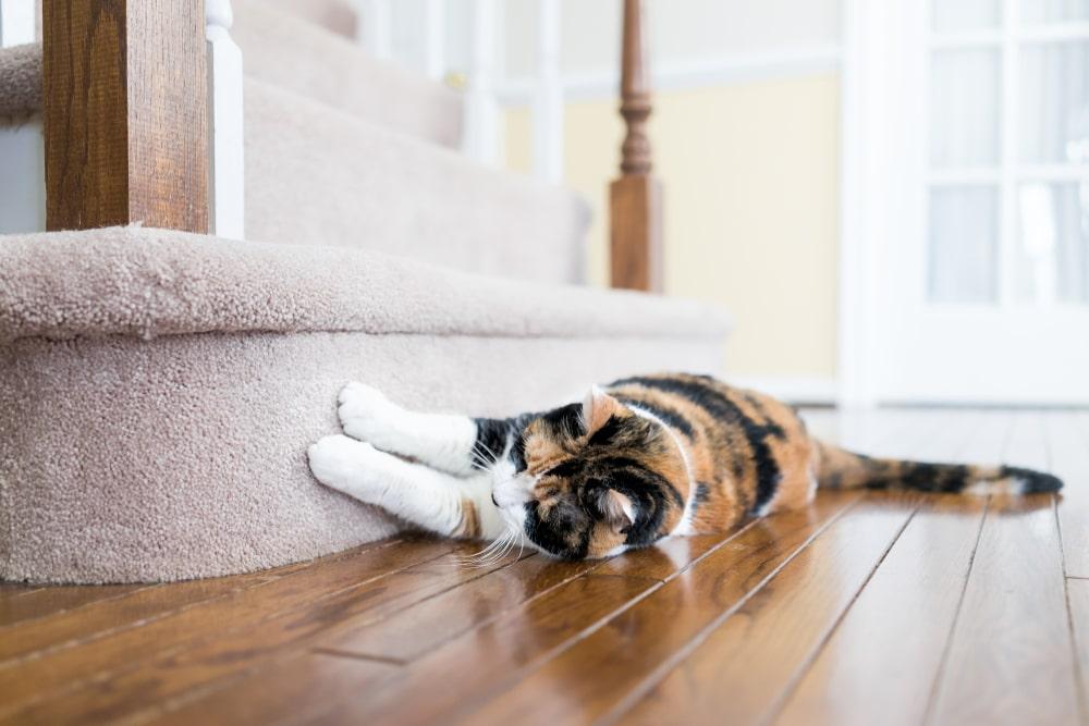 Obszywanie wykladzin i dywanow
