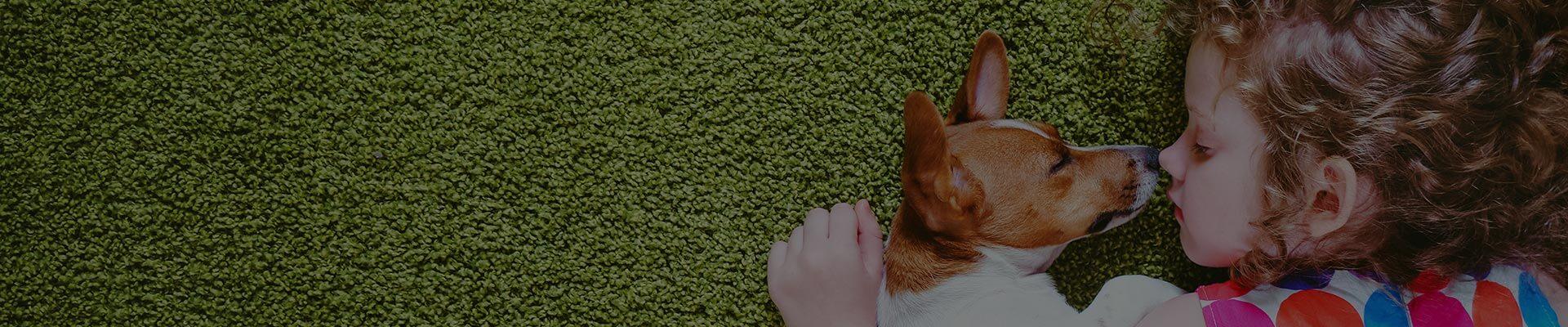 Pranie dywanów - Pralnia DAMAT